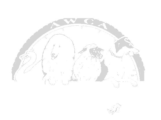 American Working Collie Association.png